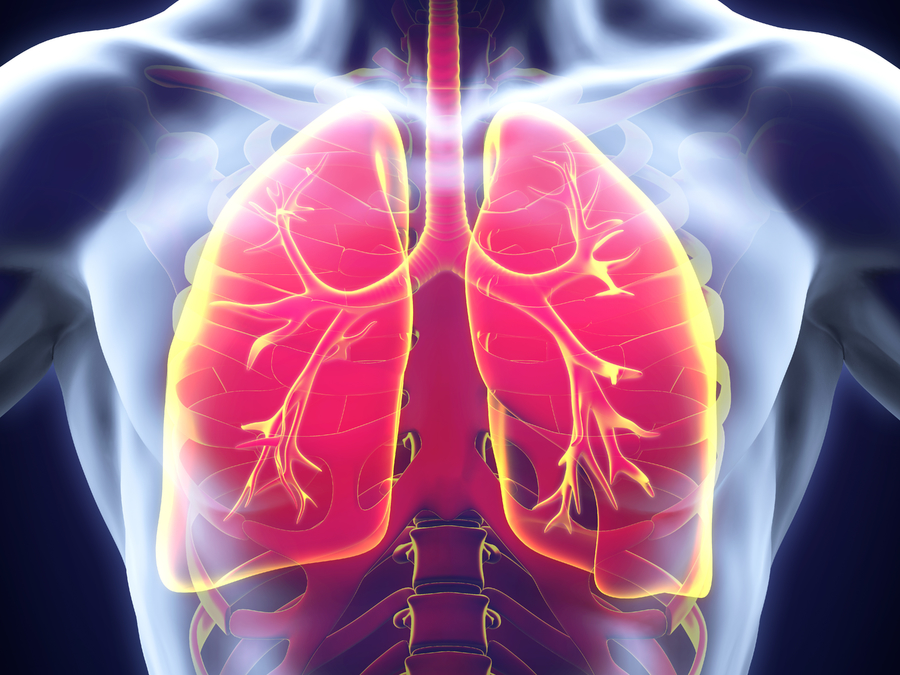 Lungs respiratory system